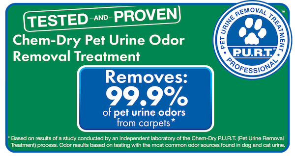 chem-dry removes pet urine and bacteria from carpet